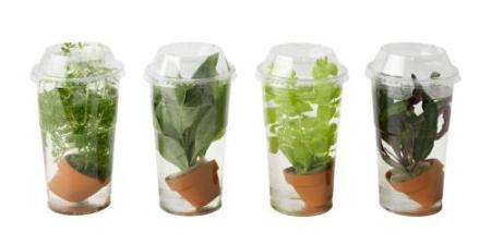 Con las plantas ikea dale un toque acogedor y de verano a - Plantas interior ikea ...
