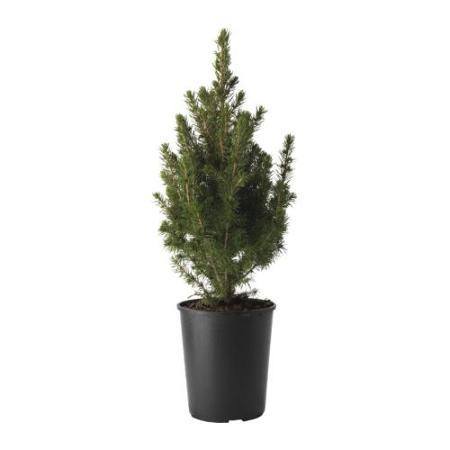 Con las plantas ikea dale un toque acogedor y de verano a - Plantas ikea naturales ...