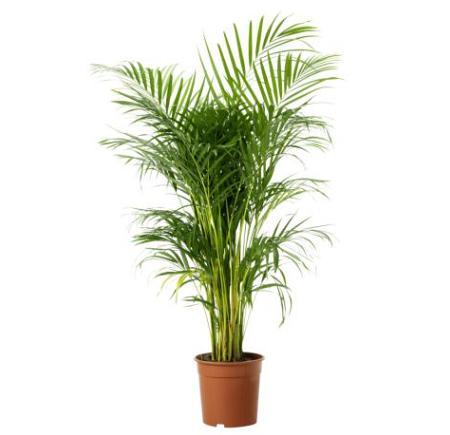 Dale un plus de belleza a tu terraza con macetas y - Plantas ikea naturales ...